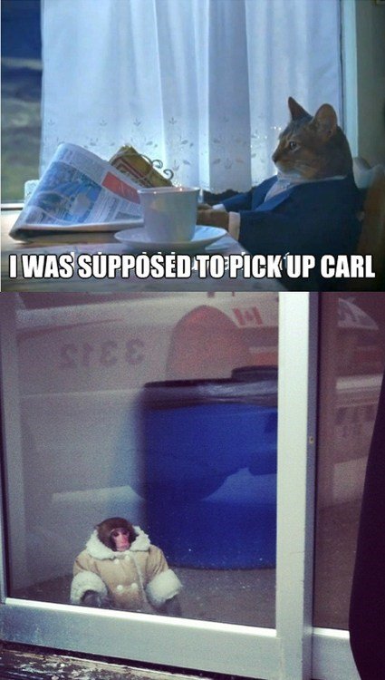 The Ikea Monkey Needs Better Friends