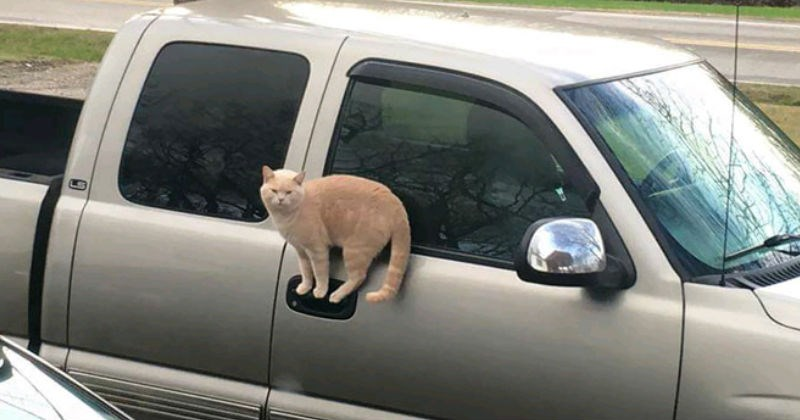 cover image of a cat standing on a car door handle