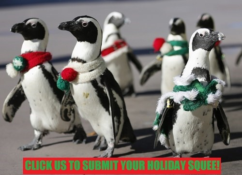 christmas hanukkah penguins submissions squee holidays