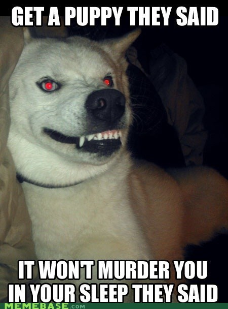 evil,dogs,They Said
