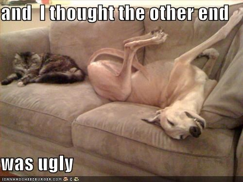 greyhound lolcats - 686667520