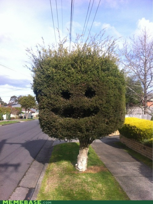 happy bush,cute,tree
