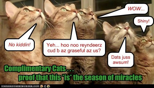 WOW... No kiddin! Yeh... hoo noo reyndeerz cud b az graseful az us? Complimentary Cats . . . proof that this *is* the season of miracles Shiny! Dats juss awsum!