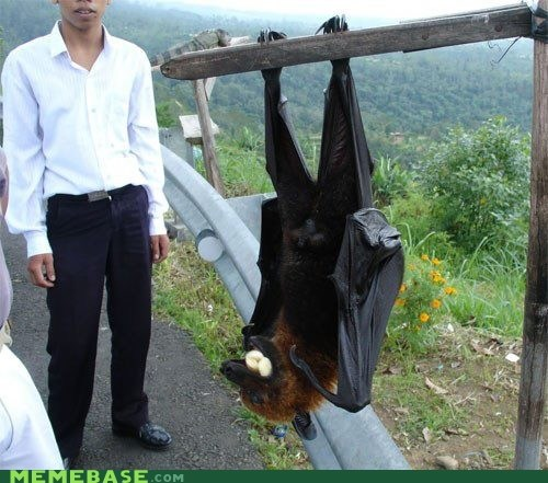 the largest bat in the world