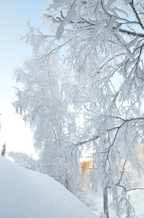 Canada,trees,snow,winter