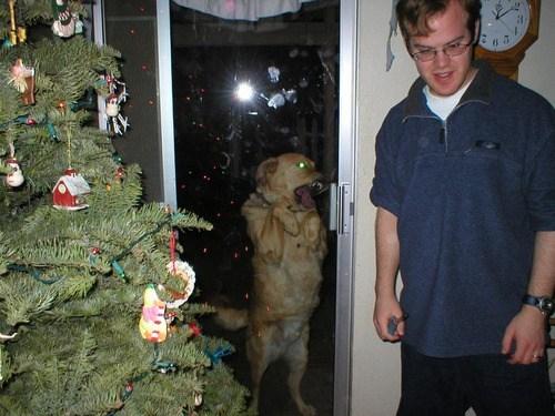 christmas wtf tree dogs funny - 6867166720