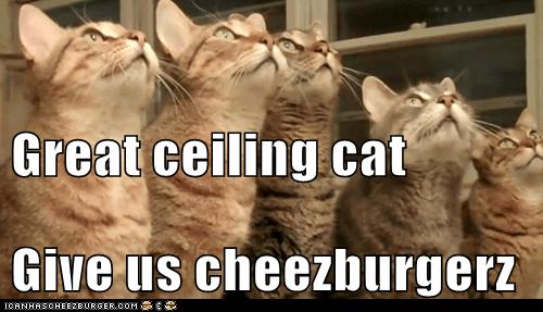 Cheezburger Image 6867355904