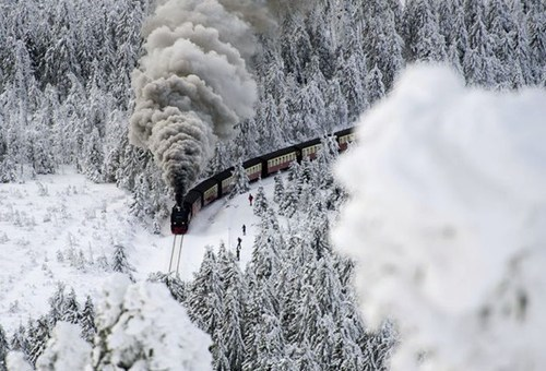 Forest,polar express,winter,train