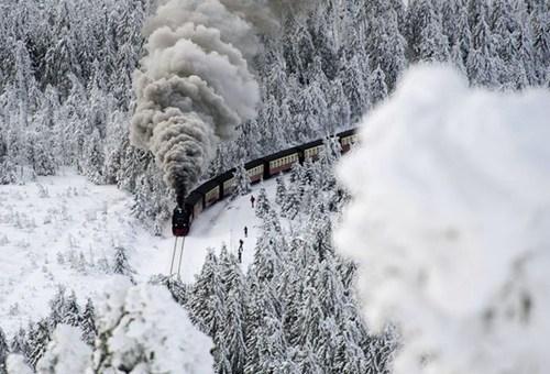 Forest polar express winter train