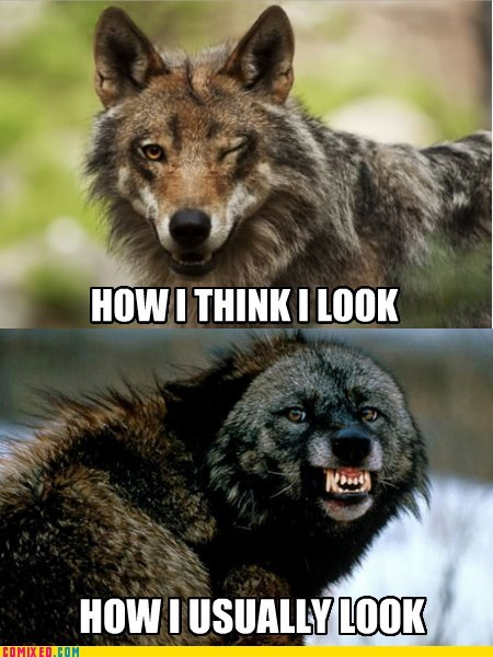 wolves,how i think i look,pictures,smile