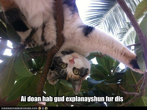captions explain tree explanation Cats - 6868180480