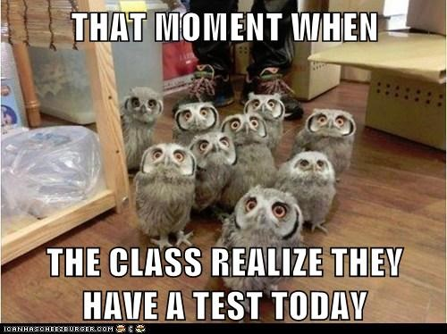 that moment owls oops surprise shocked test - 6869249280
