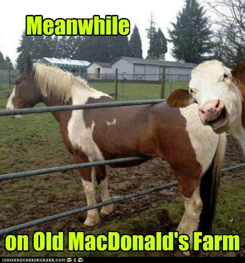 Meanwhile on Old MacDonald's Farm