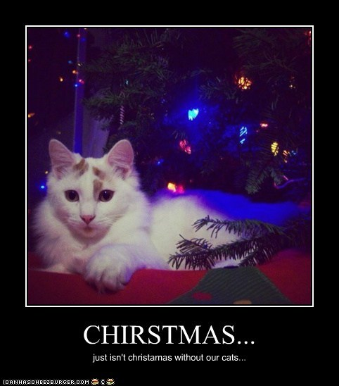 CHIRSTMAS... just isn't christamas without our cats...