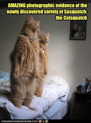 bigfoot,stand,rare,captions,sasquatch,Photo,Cats
