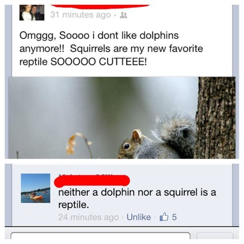 dolphins,squirrel,reptiles