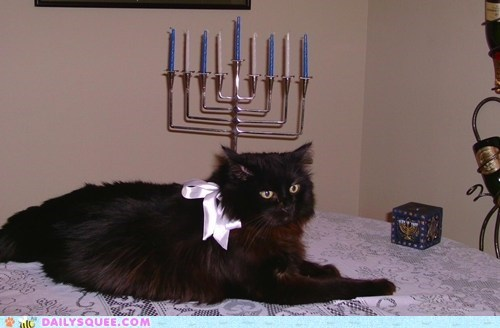 hanukkah reader squee pets menorah Cats squee holidays - 6870465792