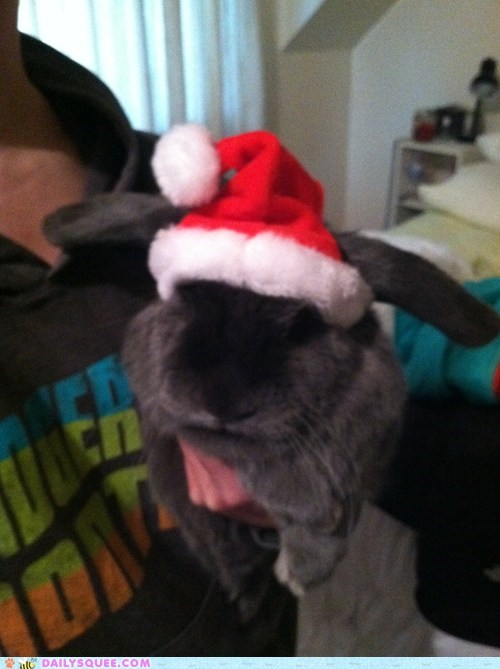 Bunday,christmas,reader squee,rabbit,santa claus,bunny,squee,holidays