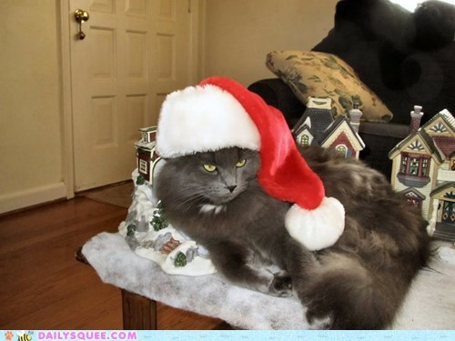 christmas reader squee pets Cats squee santa hat holidays - 6870791680