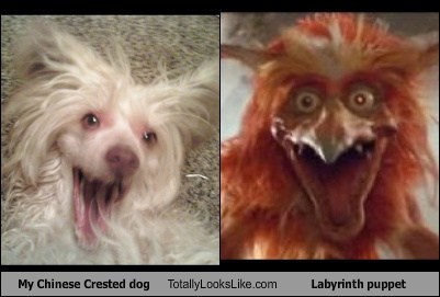 Movie TLL puppet dogs funny labyrinth chinese crested - 6870942976