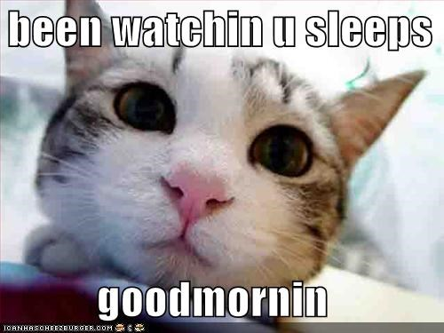 cute fud lolcats sleep stalker - 687098112