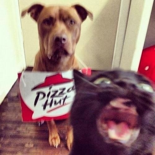 photobomb,dogs,pizza hut,pizza,Interspecies Love,goggies r owr friends,Cats