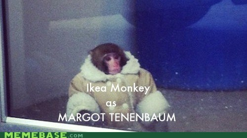 ikea monkey,The Royal Tenenbaums,movies