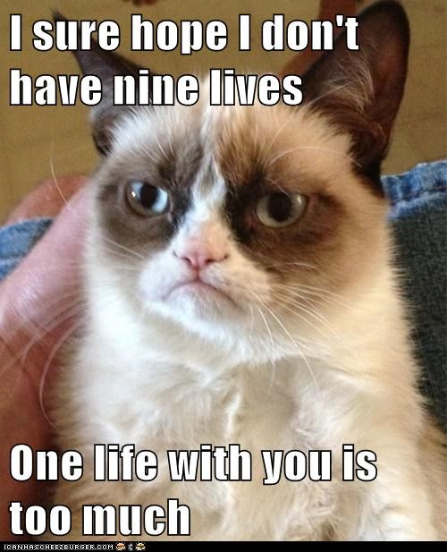 tardar sauce,nine lives,Grumpy Cat,Cats