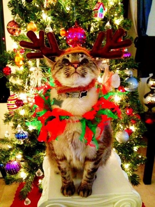 christmas decorations tree Cats funny animals holidays - 6871077888