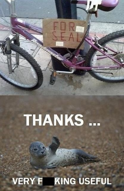 thanks,seal,bike