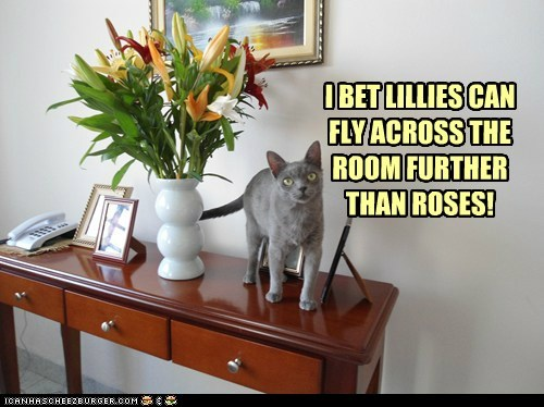 lilies captions destroy Flower roses Cats throw - 6871839744