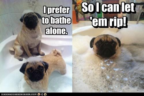 dogs farts bath pugs bubble bath alone - 6871906048