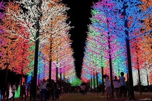 trees,lights,malaysia,Selangor