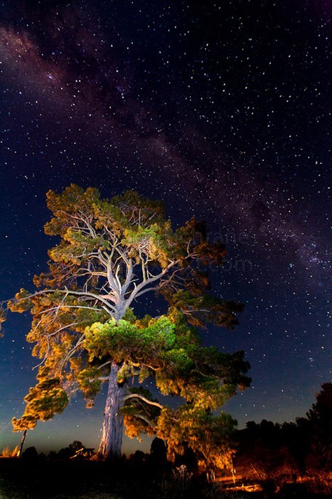 camping stars tree night - 6872107776