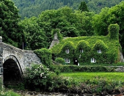 europe,hotel,magical,home,ivy