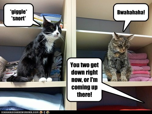 stubborn,closet,captions,laugh,shelf,Cats