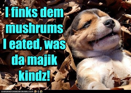 I finks dem mushrums I eated, was da majik kindz! I finks dem mushrums I eated, was da majik kindz!