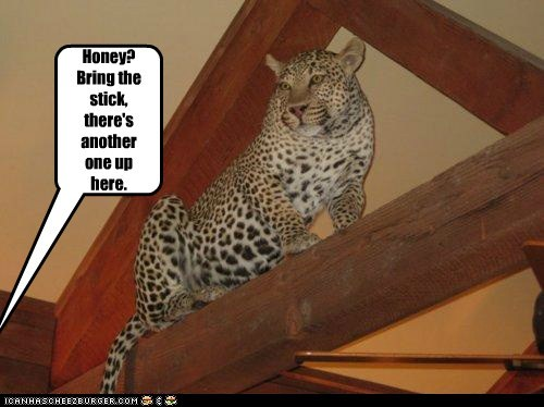 stick,leopard,stuck,captions,another one,Cats