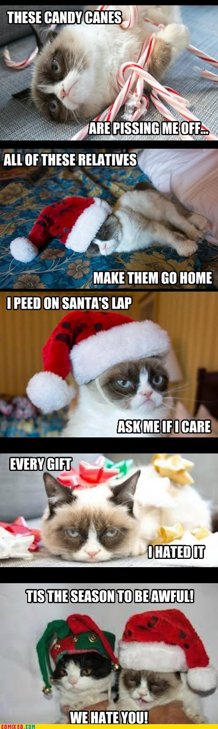christmas,holiday,Grumpy Cat,tard
