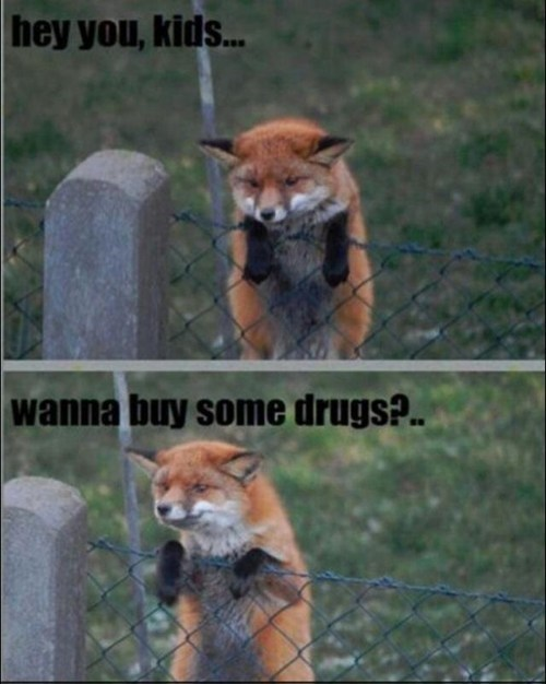 drug dealer,buy some drugs,fox,after 12