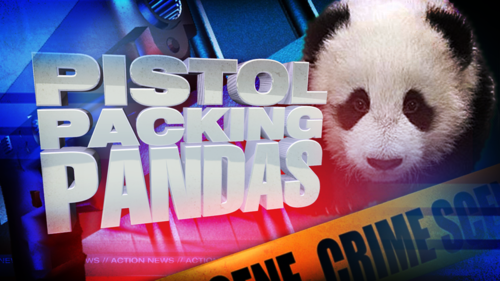news headline,pistol packing pandas,panda,live news fail