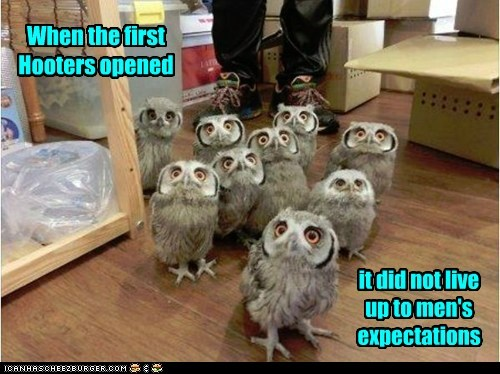 expectations owls hooters opened disappointing