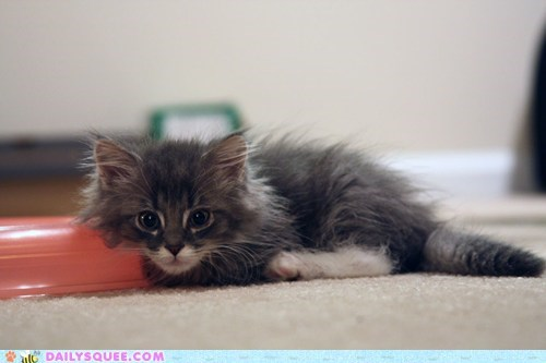 floof,kitten,reader squee,pets,foster,Cats,squee