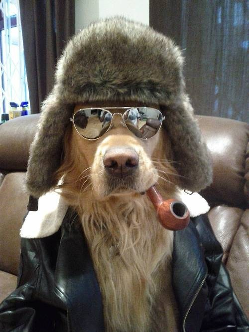 hipster pipe dogs poorly dressed g rated - 6875085824
