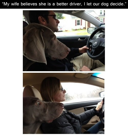 dogs,men and women,cars,scared,relationships,driving,vs