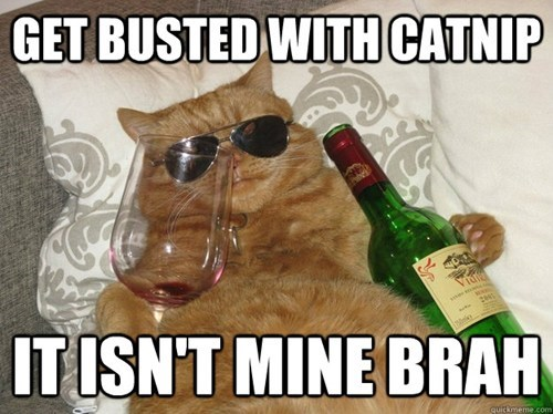cat wine friend funny - 6875486720