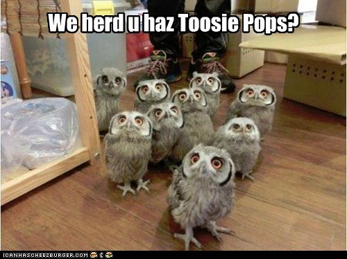 want,Staring,attention,tootsie pop,owls,eager