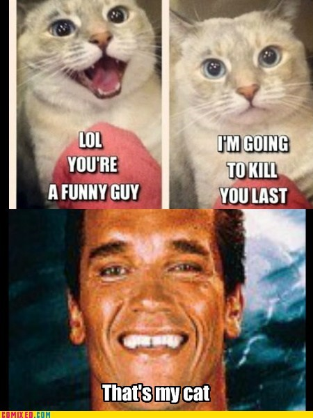 that escalated quickly,kill you,cat,Arnold Scwarzenegger