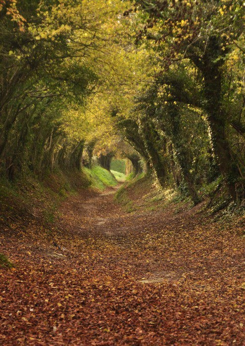 trees,england,camping,path,hill,fall,g rated,destination win