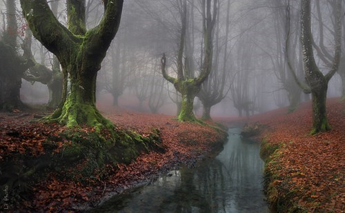 Forest mist morning landscape destination WIN! g rated